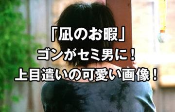凪のお暇のゴンがセミ男に!上目遣いの画像が可愛いとツイッターで話題に