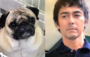 まだ結婚できない男パグ犬の名前は田中太郎?ケン役のこつぶの現在は?
